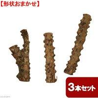 形状おまかせ 山椒の木 太枝 ショート 3本セット DIY素材 インテリア用 レイアウト素材