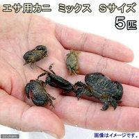 カニ 生餌 エサ用カニ ミックス Sサイズ(5匹)