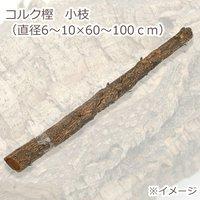 コルク樫 小枝 (直径6~10×60~100cm) 園芸 素材 爬虫類 レイアウト