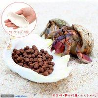 貝殻 シェルコレクション シャコガイ ミックス MLサイズ(1枚)(形状お任せ) オカヤドカリ食器