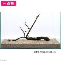 一点物 極上流木単体 60cm水槽用 107307