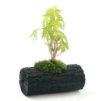 苔盆栽 炭鉢植え 品種おまかせモミジ(実生苗)Lサイズ(1鉢)