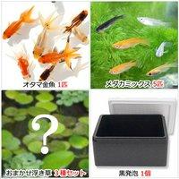 (水草)水辺のなかよし飼育セット メダカミックスとおたま金魚(浮き草付き)