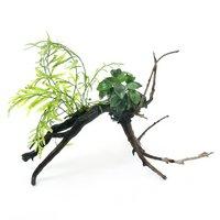 巻きたて ボルビティス&ナナプチ付 枝状流木 Sサイズ(約15cm)(無農薬)(1本)