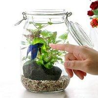 (水草)私の小さなアクアリウム ~ベタと水草の共演~ 水草と生体キット 1セット 説明書付き