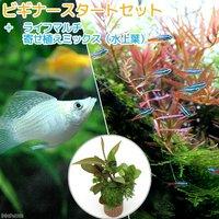 (水草)ビギナースタートセット ネオンテトラ(10匹)+ミックバルーンモーリー(4匹)