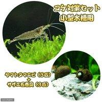 コケ対策セット 小型水槽用 ヤマトヌマエビ(3匹) + サザエ石巻貝(3匹)