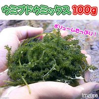 海藻 生餌 ウミブドウミックス グラム売り 100g