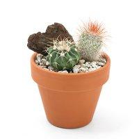 テラコッタプランツ おまかせサボテン2種ミックス 6cm素焼鉢植え(1鉢)