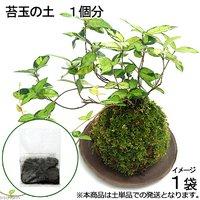 苔玉の土 1個分(1袋)