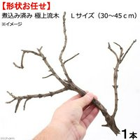 形状お任せ 煮込み済み 極上流木 Lサイズ(30~45cm) 1本