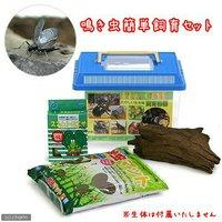 用品のみ 鳴き虫簡単飼育セット 4点セット(プラケース流木餌マット) スズムシ 鈴虫 コオロギ