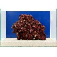 一点物 Real Reef Rock(リアルリーフロック)(LLサイズ) RR-037(1個)