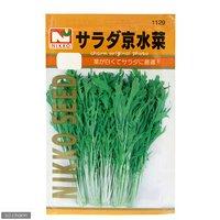 野菜の種 サラダ京水菜 品番:1129 家庭菜園