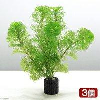メダカ金魚藻 マルチリングブラック(黒) カボンバ(3個)