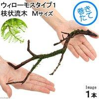 巻きたて ウィローモスsp.タイプ1 枝状流木 Mサイズ(無農薬)(1本)