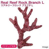 Real Reef Rock Branch(リアルリーフロックブランチ) バクテリア付き Lサイズ(1個)(形状お任せ)