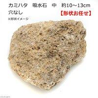 カミハタ 吸水石 中 穴なし 約10~13cm テラリウム パルダリウム 着生 コケ