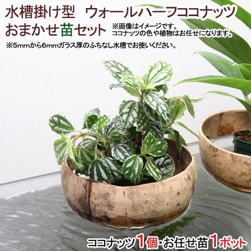(観葉)水槽掛け型 ウォールハーフココナッツ おまかせ苗セット(1セット)
