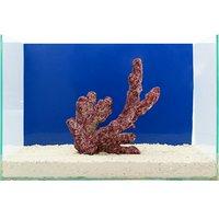 一点物 Real Reef Rock Fancy Branch(Lサイズ) RR-034(1個)