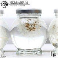 ハーバリウム タンポポ ホワイト(1本)