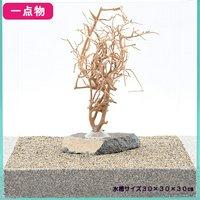 一点物 石付き盆栽流木 30cmレイアウト用 137919