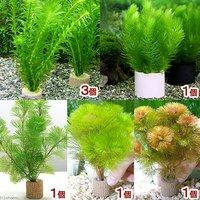 ライフマルチ(茶) メダカ・金魚藻 (1セット)