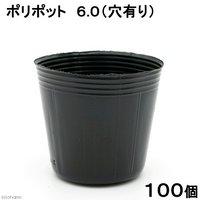 ポリポット 6.0(穴有り)(100個入り) ポット 苗