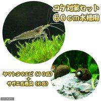 コケ対策セット 60cm水槽用 ヤマトヌマエビ(10匹) + サザエ石巻貝(6匹)