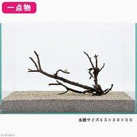 一点物 極上流木単体 45cm水槽用 222156