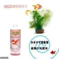 おまかせメダカ・金魚藻 2種 ミニ寄植え鉢(1ポット分) +元気水 金魚用 500ml