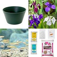 (めだか)ビオ植物とメダカセット 天竺斑蓮 鉢なしセット