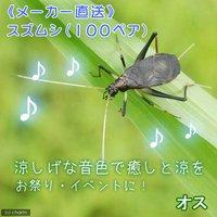 スズムシ 鈴虫 成虫(100ペア)
