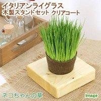 イタリアンライグラス 猫草 ネコちゃんの草 ECOポット植え 1ポット 木製スタンドセット クリアコート