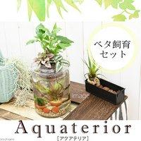 (水草)私のアクアリウム アクアテリア P150 ベタ飼育セット(生体・植物・ヒーター付き)おしゃれ水槽セット
