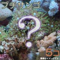おまかせプチサンゴ(ソフトコーラル)(5個)