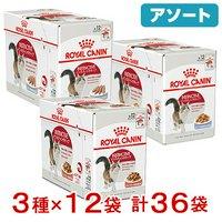ロイヤルカナン 猫 成猫用 食べ比べセット 3種各12袋 計36袋