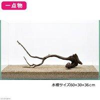一点物 極上流木単体 60cm水槽用 221061