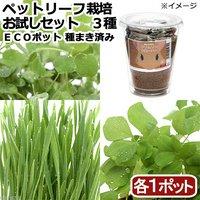 種まき済み ペットリーフ栽培 ECOポット お試しセット(3ポットセット)
