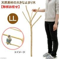 天然素材の大きな止まり木 LL 土台なし フィリピン産天然木 形状おまかせ