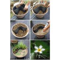 メダカのビオトープセット ガガブタ+楊貴妃メダカ+水辺植物3種 あぜなみ付