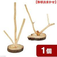 国産 天然素材の小鳥のとまり木 くりの木台座付き 枝2~3本 1個 形状おまかせ