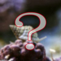 貝 おまかせムシロガイ(1匹)