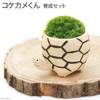 苔を育てる コケカメくん育成セット 卓上サイズ植物