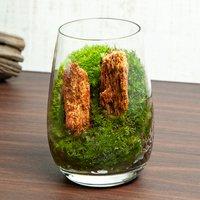 苔テラリウム 木紋岩 グラス レイアウト完成品(1個)
