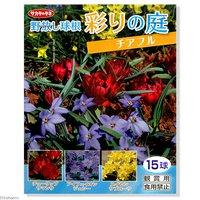 野放し球根 彩の庭 チアフル 15球詰(1袋) 北海道冬季発送不可