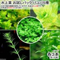 水上葉 お試しパック バコパ5種 各3本(無農薬)(計15本)(1パック分)