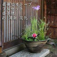 (めだか)豪華ビオトープフルセット(ビオ植物10種+睡蓮鉢(スイレン鉢) 益子焼 彩(SAI)渦潮 炭化)  (休眠株)