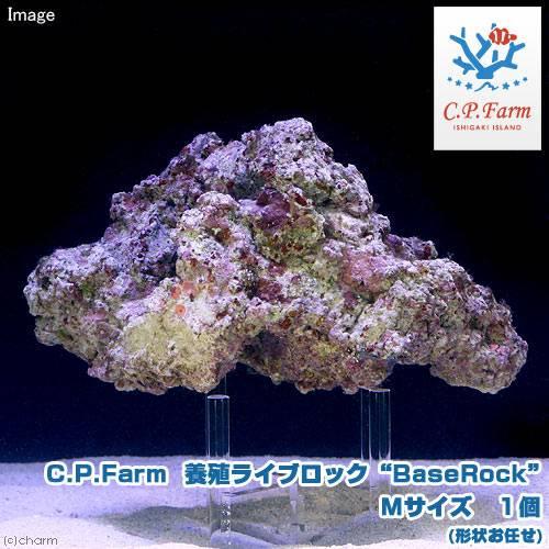 "C.P.Farm直送(海水魚)石垣島産 養殖ライブロック""BaseRock"" Mサイズ 1個(形状お任せ)(0.24個口相当)別途送料"