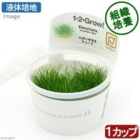 組織培養1-2-GROW! ヘアーグラスショート (液体培地) トロピカ製(無農薬)(1カップ)